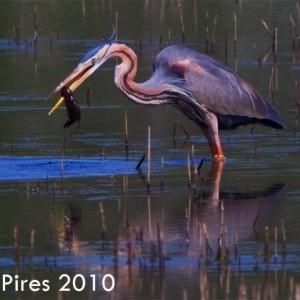 © Pedro Pires
