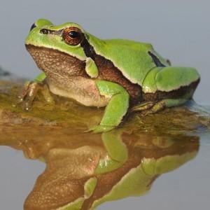 http://naturdata.com/images/species/6000/thumbnail_1287687953.jpg