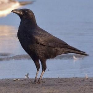 http://naturdata.com/images/species/6000/thumbnail_1295554632.jpg