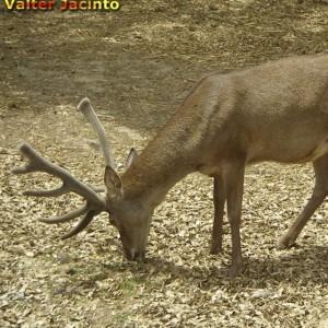 http://naturdata.com/images/species/6000/thumbnail_1303562324.jpg
