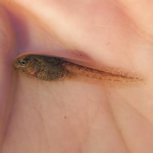 Larva © Luís Guilherme Sousa