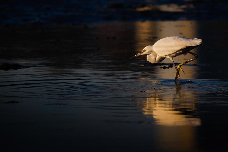 Na pesca © Armando Caldas