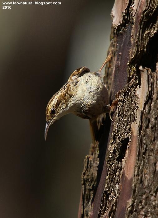 Fotografia feita no Parque Natural do Litoral Norte © Carlos Rio