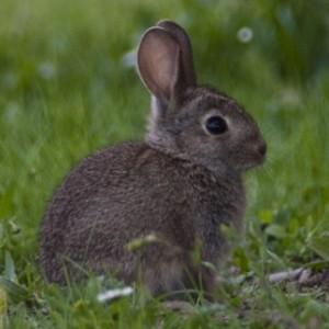 http://naturdata.com/images/species/7000/thumbnail_1250431820.jpg