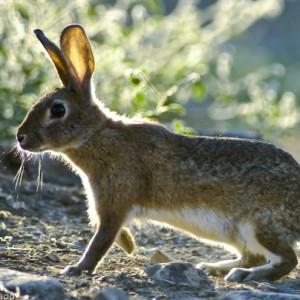 http://naturdata.com/images/species/7000/thumbnail_1250431940.jpg
