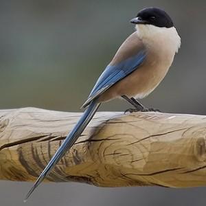 http://naturdata.com/images/species/7000/thumbnail_1253329715.jpg