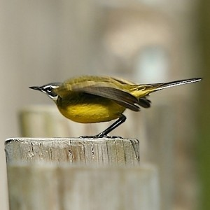Fotografia feita no Estuário do Cávado - Parque Natural do Litoral Norte © Carlos Rio