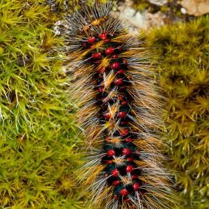 Larva © Fernando Romão