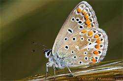 Lusoborboletas