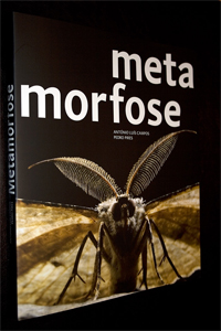 Metamorfose (António Luís Campos e Pedro  Pires)