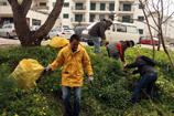 Cascalenses recolhem cerca de 30 Toneladas de resíduos