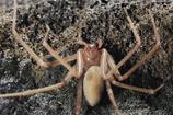 Há aranhas venenosas em Portugal?