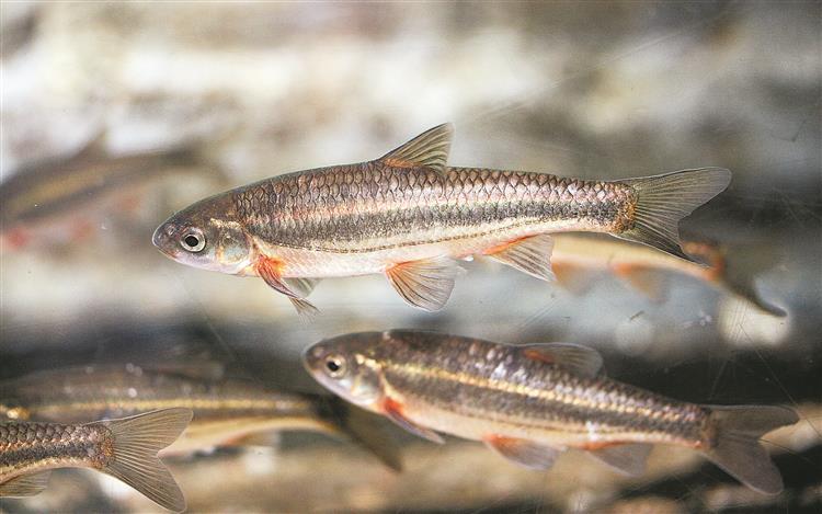 Artigo SOL – 100 novas espécies em Portugal